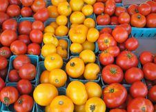 Free Tomatoes Stock Images - 15825244