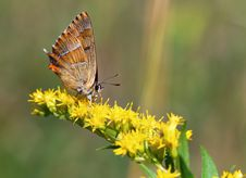 Free Butterfly On Yellow Plant Stock Photography - 15825312