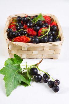 Free Summer Berries Stock Photo - 15825420