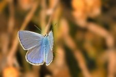 Free Blue Butterfly Royalty Free Stock Images - 15825669