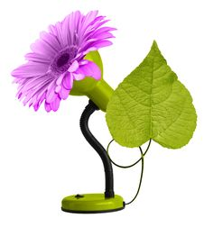 Green Desk-lamp With Leaf And Pink Gerbera Stock Photography