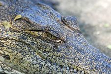 Free Crocodile S Eye Royalty Free Stock Images - 15826589