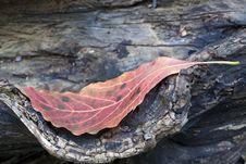 Free Autumn Leaf On Log Royalty Free Stock Photo - 15827415