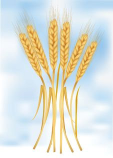 Ears Of Wheat On Sky. Stock Photography