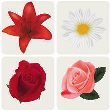 Free Four Beautiful Flowers. Stock Images - 15829814