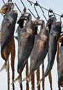 Free Drying Fish Royalty Free Stock Photo - 15832795