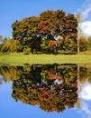 Free Autumn Landscape Stock Photo - 15837820