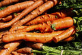 Free Carrots Royalty Free Stock Images - 15838189