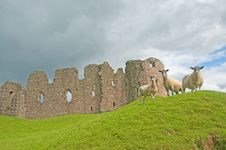 Free Sheep And Castle Royalty Free Stock Images - 15830069