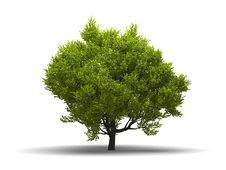 Free Isolated Green Broadleaf Tree Royalty Free Stock Photo - 15830855