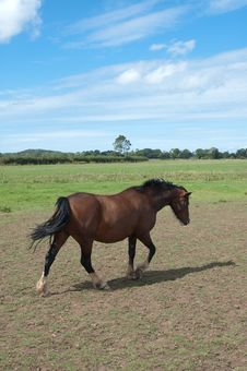 Free Horse In Field Stock Photography - 15832432