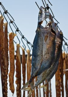 Free Drying Fish Stock Images - 15832824