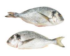 Pair Of Gilt Head Bream Fish Royalty Free Stock Photo