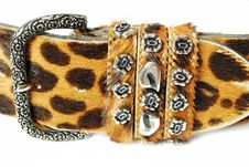 Free Leopard Belt Stock Photo - 15833560
