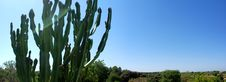 Free Panoramic Cactus And Field Stock Photos - 15833723