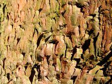 Free Pine Bark Background Royalty Free Stock Photo - 15833835