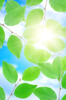 Free Green Leafe  In Sunny Day. Royalty Free Stock Photo - 15834875