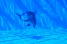 Free Dolphin Under Water Stock Photos - 15835503