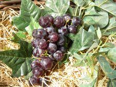 Free Grapes Stock Photos - 15835733