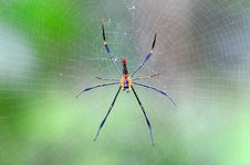 Free Big Spider Royalty Free Stock Photo - 15837455