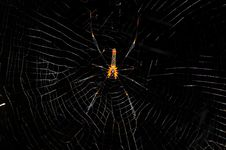 Free Big Spider Stock Images - 15837464