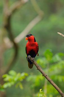 Free Red Parrot On Branch Stock Photo - 15837600