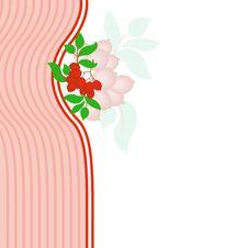 Rowan On Pink Royalty Free Stock Image