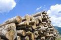 Free Woodpile Stock Image - 15840811