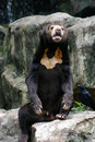 Free Black Bear In Zoo Stock Photos - 15841613