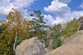 Free Trees On Stones Stock Photo - 15844750