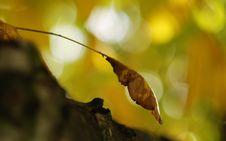 Free Autumn Leaves Stock Photo - 15840550