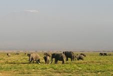 Free Grasslands Of The African Elephant In Kenya Royalty Free Stock Photos - 15840648