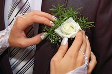 Free Hands Fiancee On The Buttonhole Of Groom Stock Images - 15841634