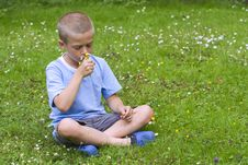 Free Young Boy Sitting In A Meadow Royalty Free Stock Image - 15841876