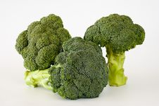Fresh Sprouting Broccoli Stock Photo