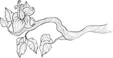 Free Branch Royalty Free Stock Image - 15844876