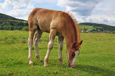 Free Foal. Royalty Free Stock Photography - 15844907