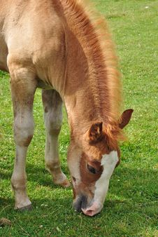 Free Foal. Royalty Free Stock Photo - 15844955