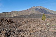Free Samarra, Tenerife Island Royalty Free Stock Photo - 15847545