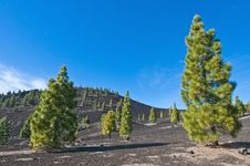 Free Samarra, Tenerife Island Stock Images - 15847554
