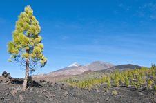 Free Samarra, Tenerife Island Royalty Free Stock Photos - 15847588