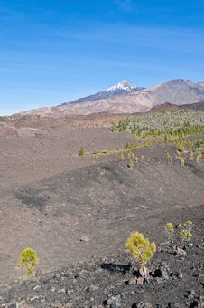 Free Samarra, Tenerife Island Royalty Free Stock Images - 15847589