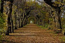 Free Autumn Avenue Stock Photo - 15847970