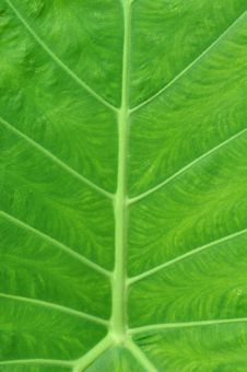 Free Green Leaf Texture Stock Photo - 15848170