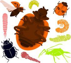 Free Beetle Set Royalty Free Stock Photo - 15848715