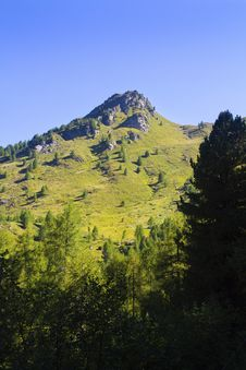 Free Mountain Pine Royalty Free Stock Image - 15849076