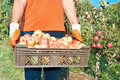 Free Fresh Vegetable In  Basket Stock Photo - 15859120