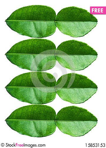 Free Lime Leaves Stock Photos - 15853153