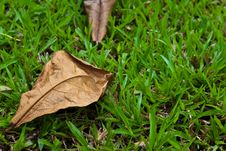 Free Dry Leaf On The Ground Stock Image - 15852011