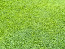 Free Grass Background Royalty Free Stock Photo - 15852515